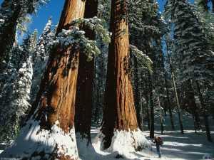 Какой лес выбирать для строительства